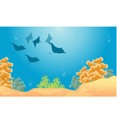 Landscape of coral reef with stingray vector