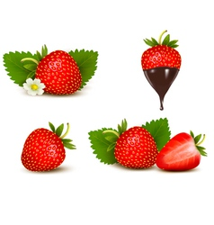 Set ripe sweet strawberry and flower vector