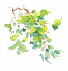 Watercolor branch with green leaves on white vector