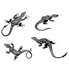 Black lizards isolated on white background vector image
