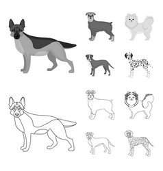 Dog breeds outlinemonochrome icons in set vector
