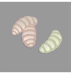 maggots vector image