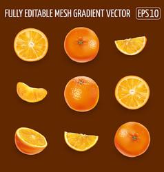 Set ripe oranges on a dark brown background vector