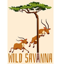 Wild savanna with deer and tree vector image