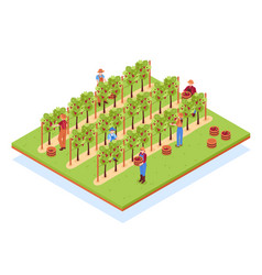 Winery isometric composition vector
