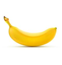 yellow banana vector image vector image