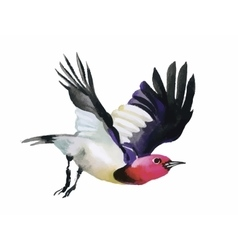 Watercolor colorful flying Bird on white vector image vector image