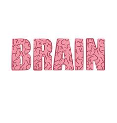 brain pink word vector image