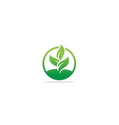 green leaf seed eco organic logo vector image