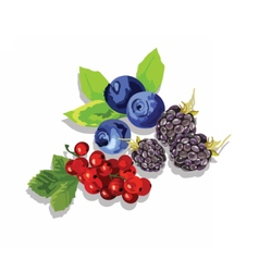 Blackberry blueberry and cranberry fruit set vector
