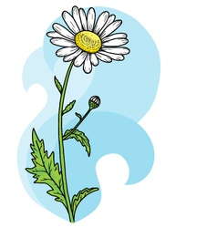 Floral beautiful chamomile card vector image