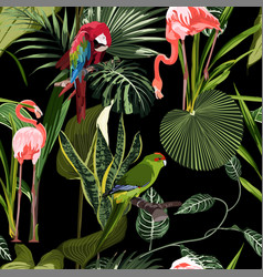 tropical birds parrot flamingo plants leaves vector image