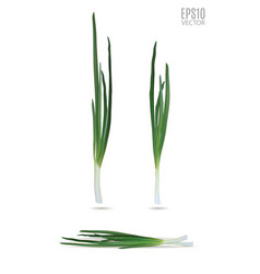 young green onion set isolated on white vector image