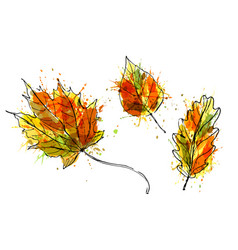 colored hand sketch of leaves vector image vector image
