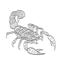 Coloring scorpion for adults vector