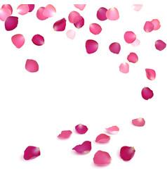 Falling petals of pink roses vector