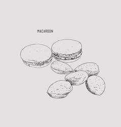 macaroon and almonds sketch vector image