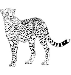 running cheetah hand-drawn with ink vector image