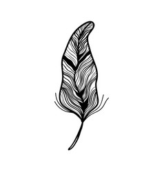 rustic feather ornate decorative design vector image