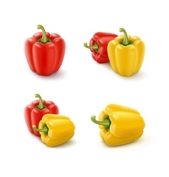 Set of colored bulgarian bell peppers paprika vector