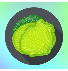 Whole cabbage flat icon vector