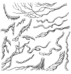Liana branches sketch vector
