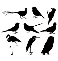 collection bird silhouettes vector image