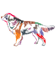 Colorful decorative standing portrait of bernese vector