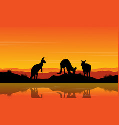 Landscape kangaroo on the river silhouette vector