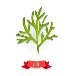 Leaves of dill vector image