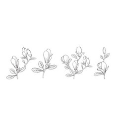 set different magnolia on white background vector image