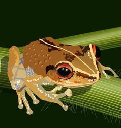 coqui frog vector image vector image
