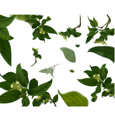 vivid branch with fresh green leaves summer or vector image