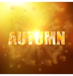 Autumn background with gold maple leaves vector image