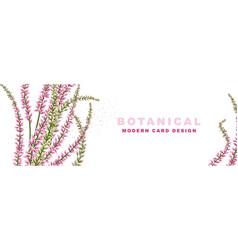 Lavender botanical flower purple natural wide vector