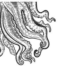 octopus tentacle sketch engraving vector image