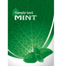 mint background vector image