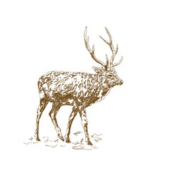 deer with beautiful horns hand drawn minimalism vector image