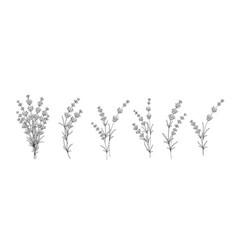 set different lavender on white background vector image