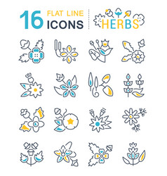 Set line icons herbs vector