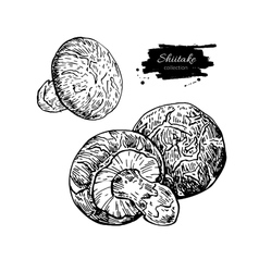 Shiitake mushroom hand drawn vector image vector image