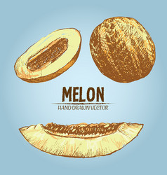 Digital detailed color melon hand drawn vector