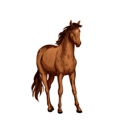 Horse of arabian breed sketch with brown mare vector