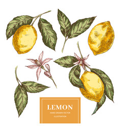 Lemons hand drawn colorful vector