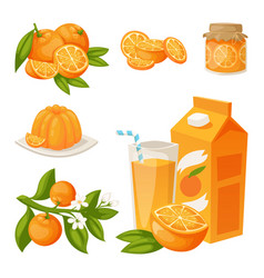 Oranges and orange products vector