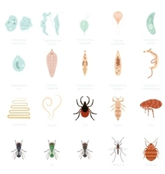 Set of parasites vector