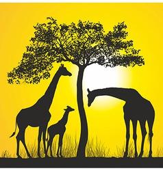Giraffes on the african savannah vector