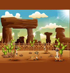 cartoon meerkats enjoying on the desert vector image