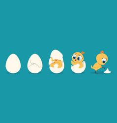 hatching chicken cartoon baby chick birthday step vector image
