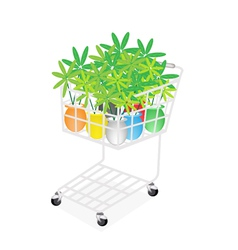 Lovely Tree Pot in A Shopping Cart vector image